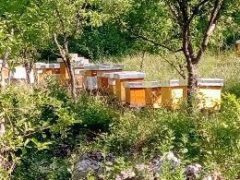 Agrodm pčelarstvo